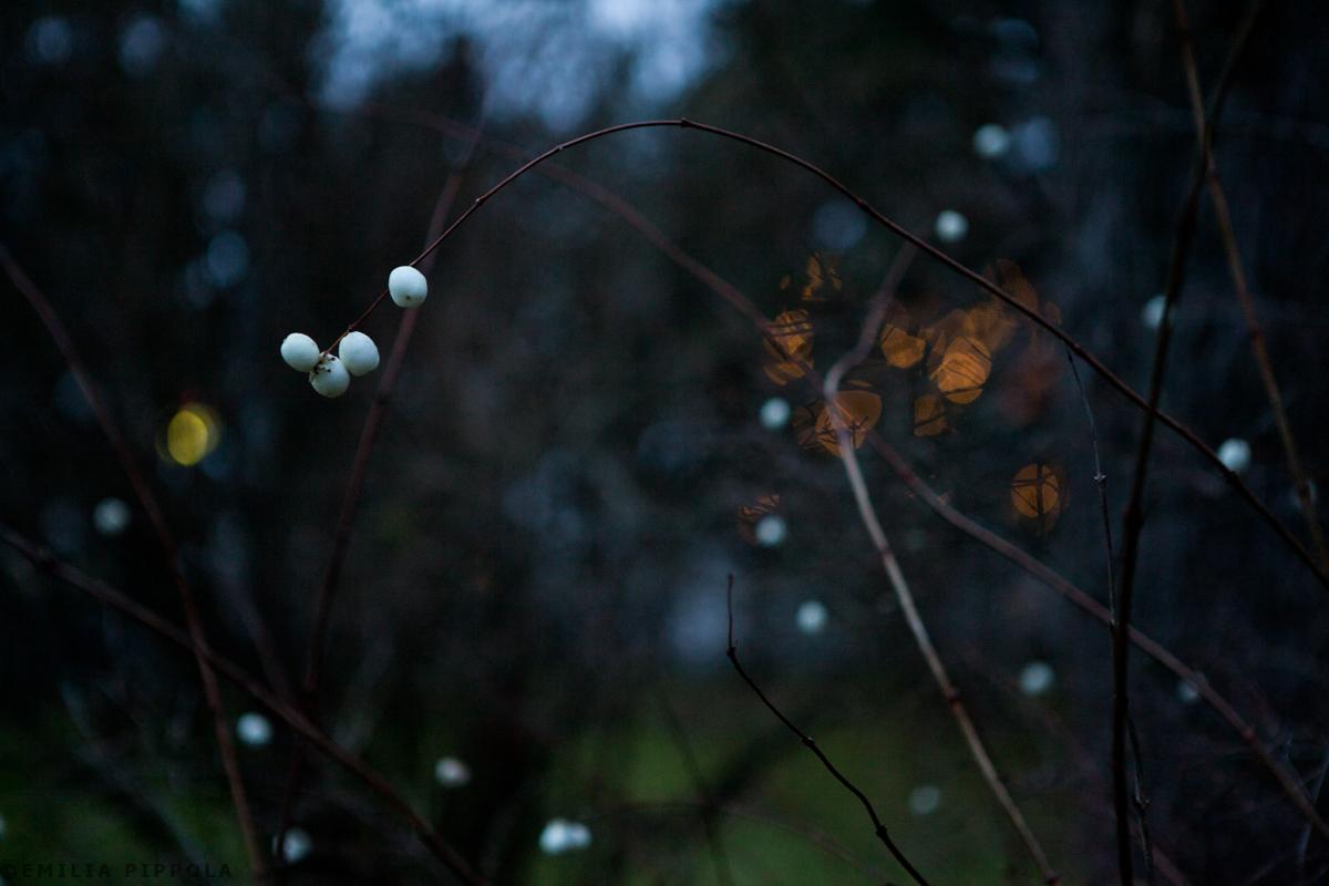 Lumimarjoja sekä Uoti ja Lyyli kotipihalla.